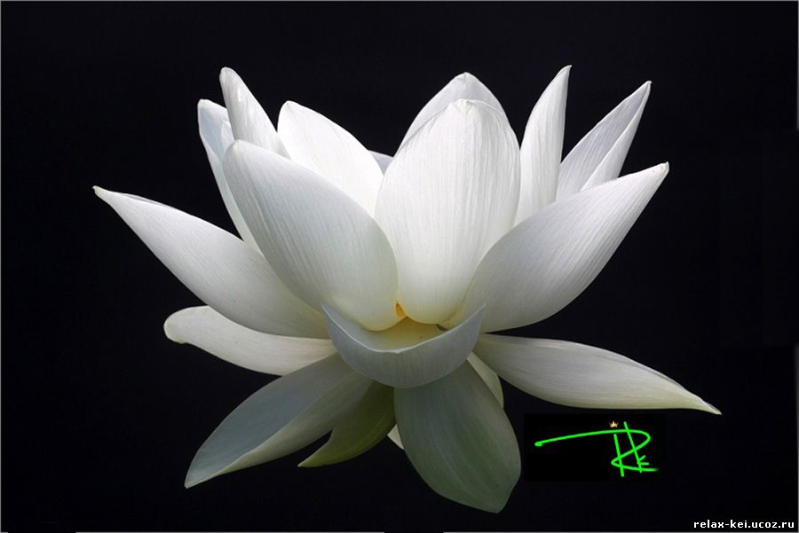 (426x313, 195Kb)Медитация от души с любовью